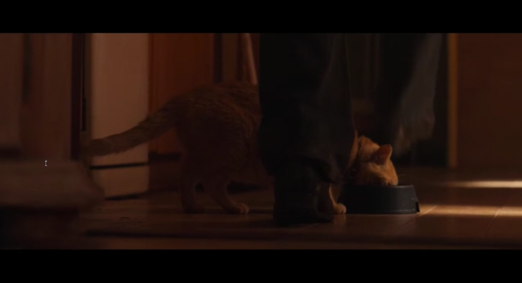 Mylo de rosse tijgerkat in langspeelfilm Ferry